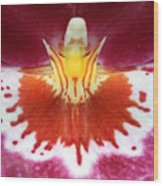 Orchid 9 Wood Print