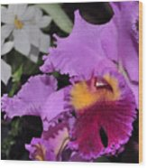orchid 942 Purple Brassolaeliocattleya  Wood Print