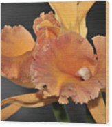 orchid 955 Orange Brassolaeliocattleya Wood Print