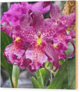 Orchid Aliceara Marfitch Wood Print