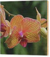 Orchid Aliveness Wood Print