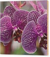 Orchid Ascda Laksi Wood Print