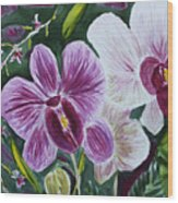 Orchid At Aos 2010 Wood Print