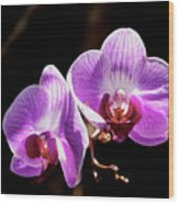 Orchid At Fairchild Gardens Wood Print