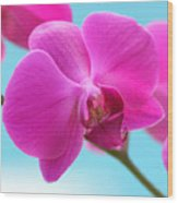 Orchid At The Ocean Closeup Wood Print