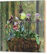 Orchid Basket Wood Print