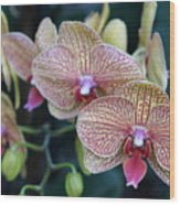 Orchid Beauty Wood Print