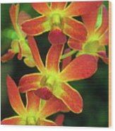 Orchid Blooms Wood Print