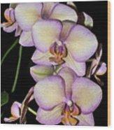 Orchid Blossoms I Wood Print