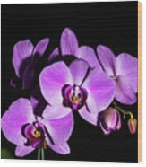 Orchid Blossoms IIi Wood Print