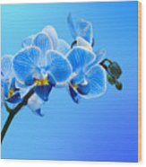 Orchid Blue Wood Print