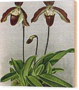 Orchid, C. Oenanthum Superbum, 1891 Wood Print