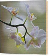 Orchid C Wood Print