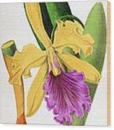Orchid, Cattleya Dowiana, 1880 Wood Print