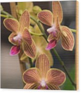 Orchid Chingruey's Goldstaff Wood Print
