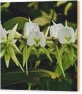 Orchid Choir Wood Print