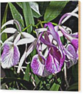 Orchid Cluster Wood Print