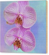 Orchid Delight - Two Blooms Against A Rainbow Background Wood Print