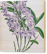 Orchid, Dendrobium Transparens, 1891 Wood Print