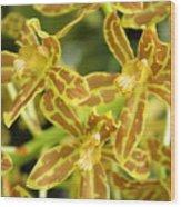 Orchid Drama Canvas Wood Print