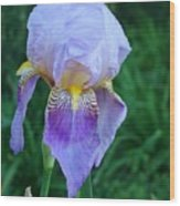 Orchid Dreams Wood Print