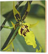 Orchid Expression 4237 Wood Print