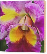 Orchid Expression 9550 Wood Print