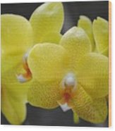 Orchid Family Wood Print