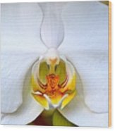 Orchid Fire Wood Print
