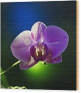 Orchid Flower On Black Background Wood Print