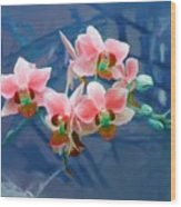 Orchid Flowers 8 Wood Print