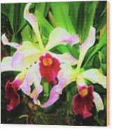 Orchid Flowers Color 1 Wood Print