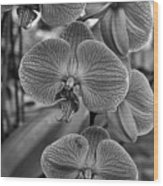 Orchid Glory Black And White Wood Print