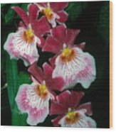 Orchid Group Wood Print
