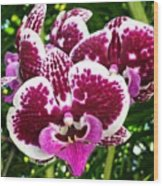 Orchid Hanging In Palms Wood Print