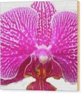 Orchid I Pretty Wood Print