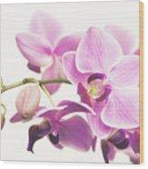 orchid II Wood Print