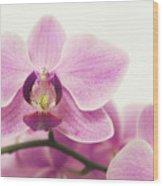 orchid III Wood Print