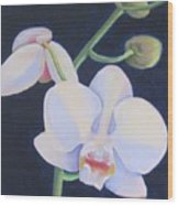 Orchid In Blue Wood Print