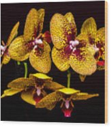 Orchid In Space Wood Print