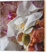 Orchid Iv Wood Print