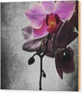 orchid IV Wood Print