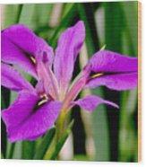 Orchid Iris Wood Print
