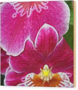 Orchid Love Wood Print