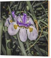 Orchid Magic Wood Print