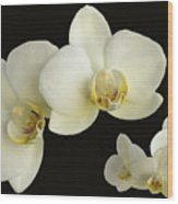 Orchid Montage Wood Print