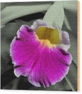 Orchid Of A Different Color Wood Print