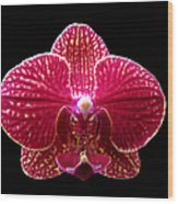 Orchid On Black 2 Wood Print