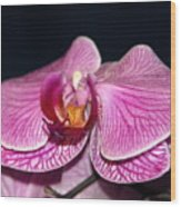 Orchid Orchid Wood Print