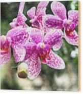 Orchid Phalaenopsis Carnival Bonsall Wood Print